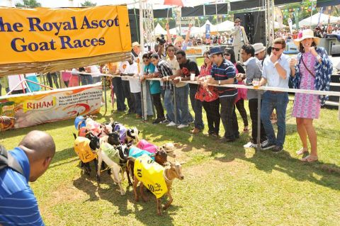 What You Need To Know About Royal Ascot Goat Races