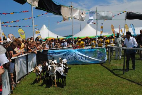 Proceeds From Royal Ascot Goat Races To Benefit Tag Rugby