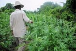 Plan For Uganda To Legalize Marijuana Growing In Final Stages