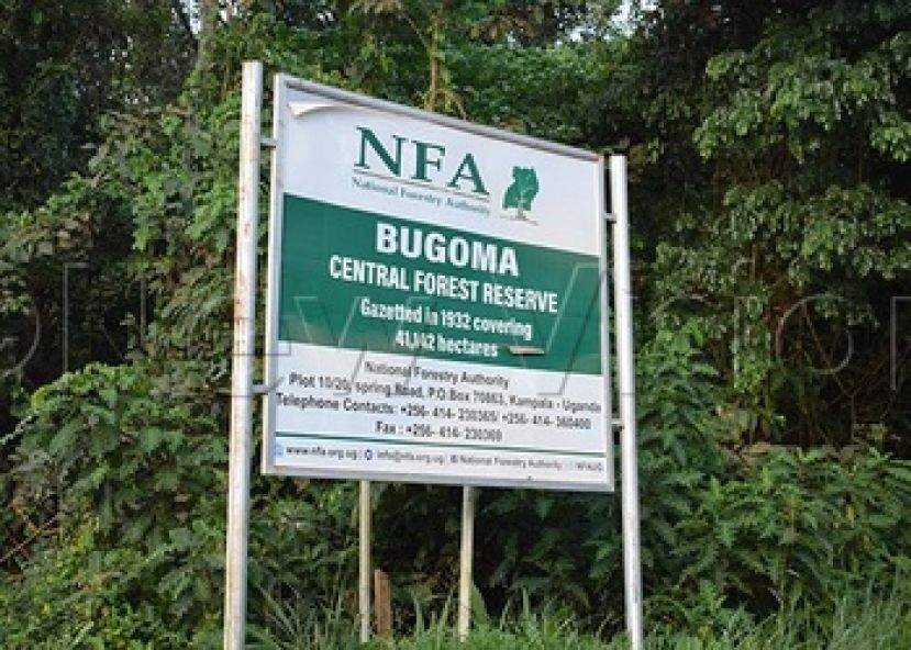 The conversion of Bugoma forest into a sugarcane plantation undermines the implementation of the Sustainable Development Goals
