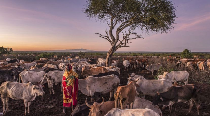 Regional Pastoral Livelihoods Resilience Project will develop coping mechanisms against drought and animal diseases