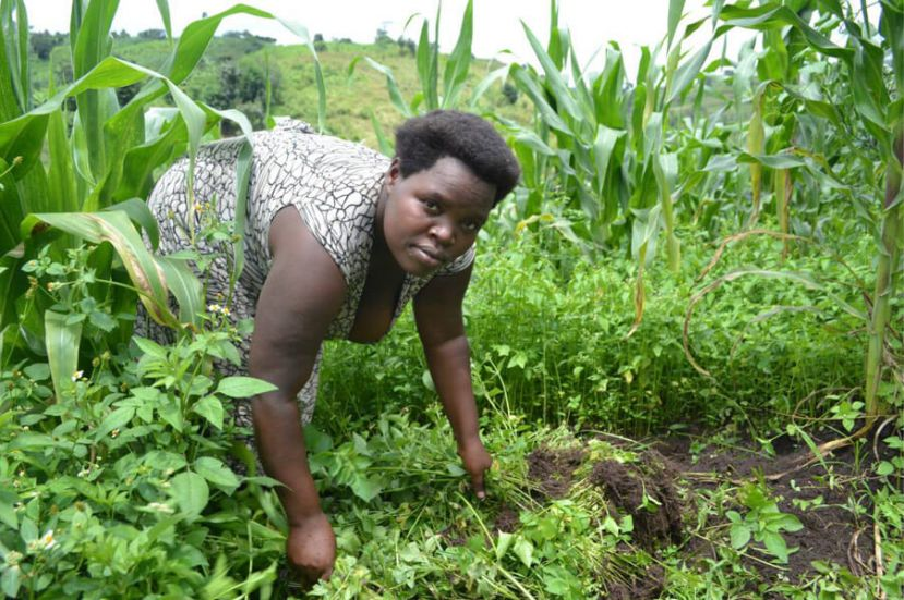 Activists say that organic farming can support rural women to overcome the challenges of poverty