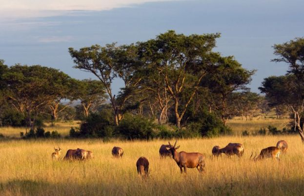 Treat your family to a relaxing trip to Queen Elizabeth National Park