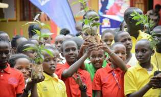 Kids To Get Free Fruit Tree Seedlings At Green Xmas Festival