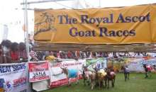Speke Resort Goat Race Set For August Return