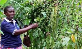 Uganda, Ethiopia In One Coffee Climate Boat