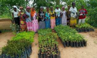 Trees For The Future, Arbor Day Foundation Partner To Plant 3mtrees In Africa